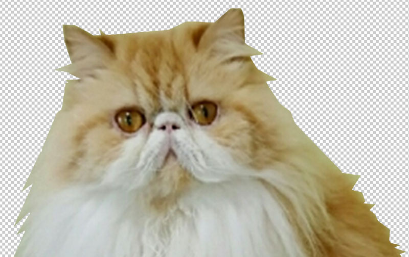 Adobe Photoshop Elements 12 4.jpg