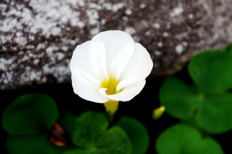 お庭の花 3.JPG