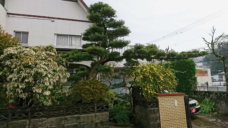 実家の庭 2.JPG