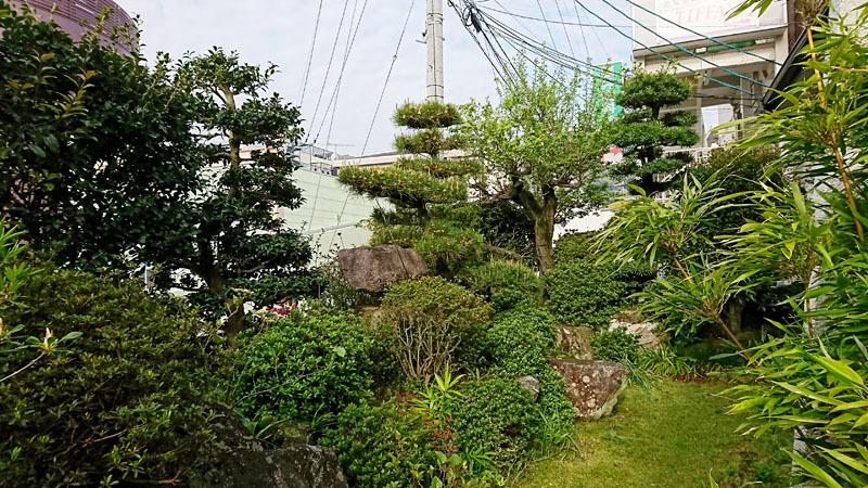 実家の庭 3.JPG