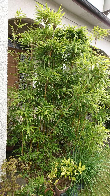 実家の庭 4.JPG