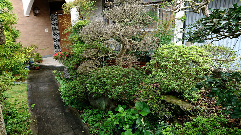 実家の庭 6.JPG