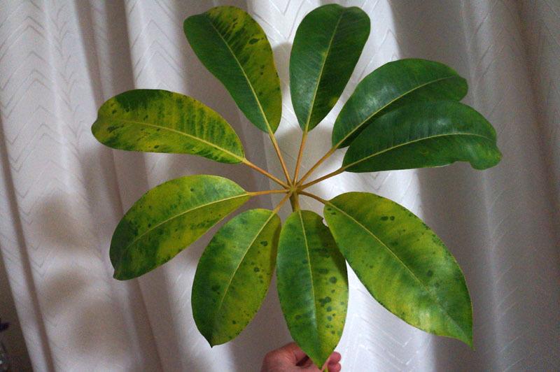 観葉植物 1.JPG
