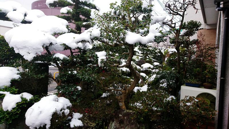 長崎 雪 1.JPG