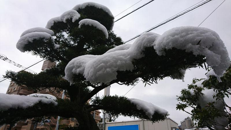 長崎 雪 5.JPG