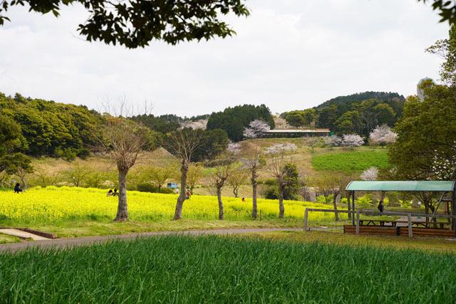 あぐりの丘 (14).JPG