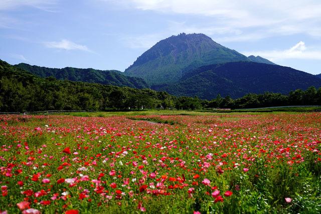 しまばら火張山花公園 普賢岳 4.JPG