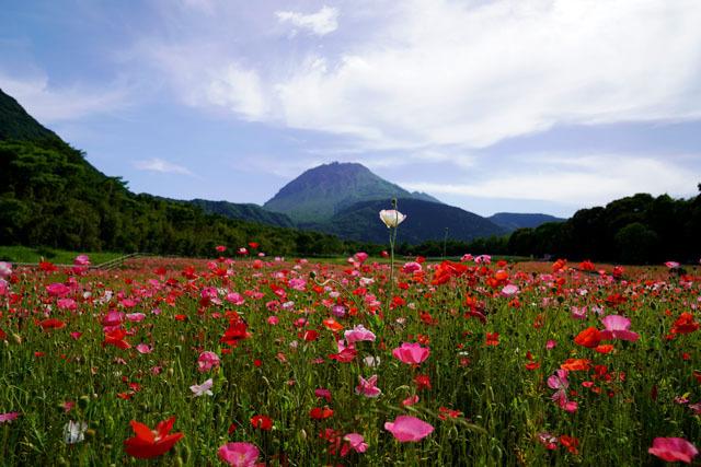 しまばら火張山花公園 普賢岳 6.JPG