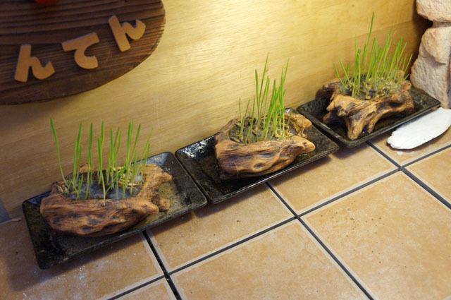ペット用生野菜の種.JPG