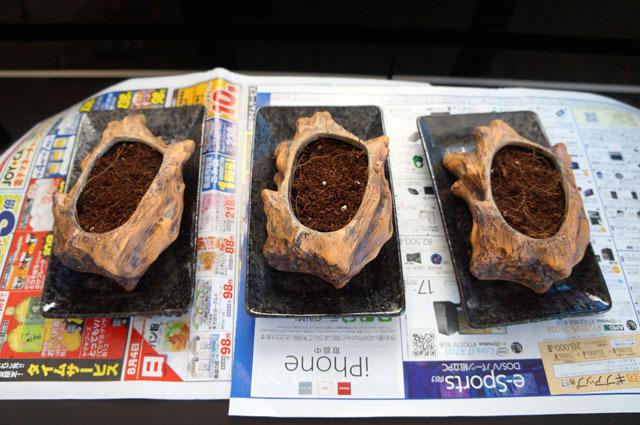 ペット用生野菜の種 (1).JPG