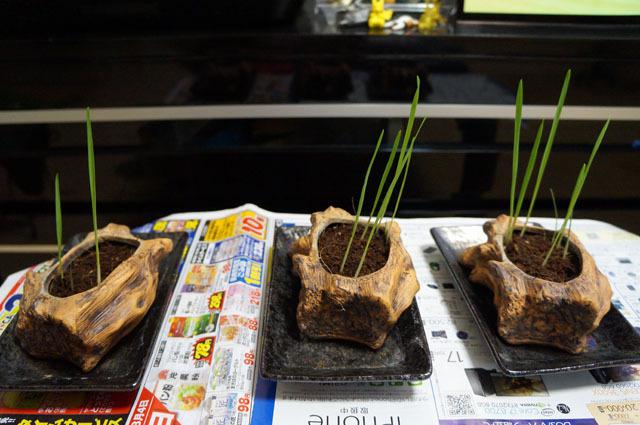 ペット用生野菜の種 (2).JPG