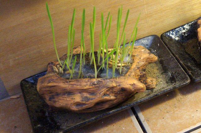 ペット用生野菜の種 2.jpg