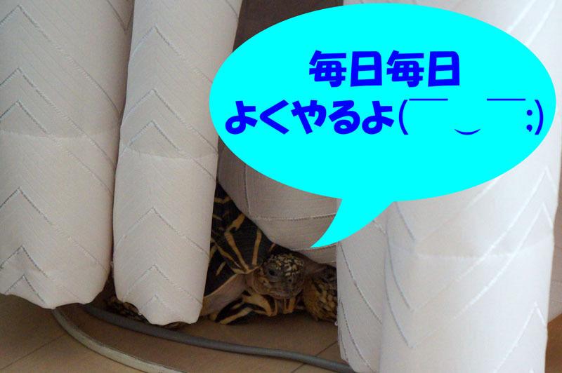 ホシガメ 1.JPG
