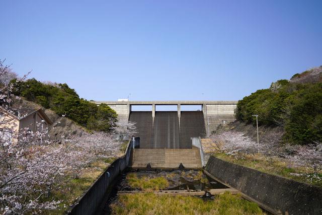 伊佐ノ浦公園 桜 (2).JPG