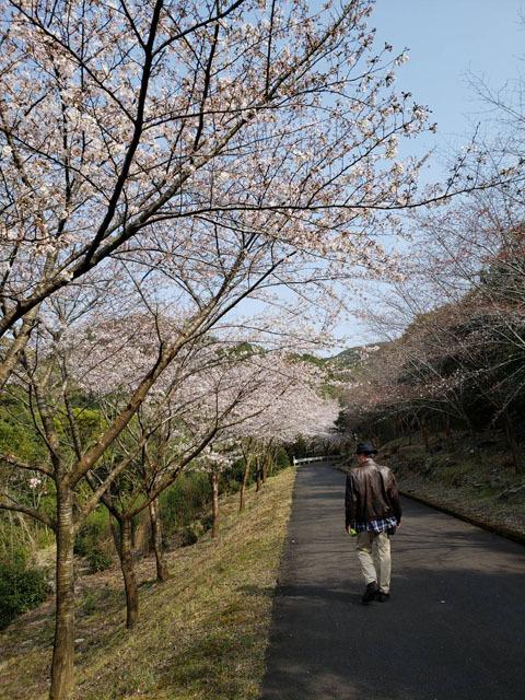 伊佐ノ浦公園 桜 (23).jpg