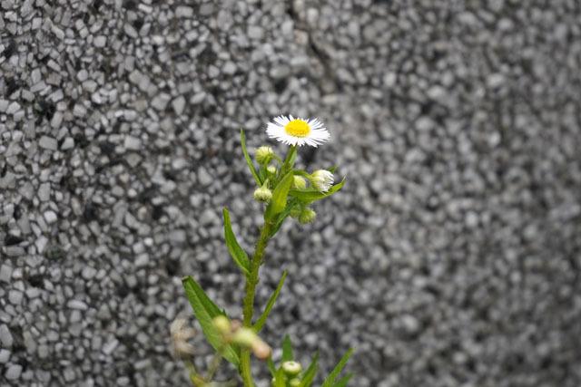 墓参り 4.JPG