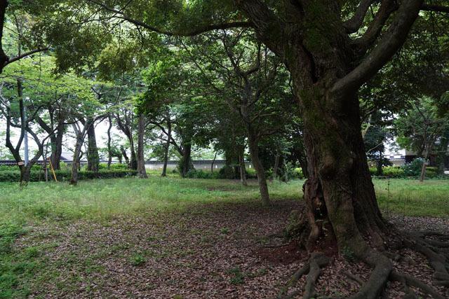 大村公園 玖島城跡 1.JPG