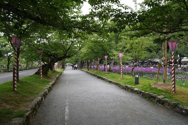 大村公園 花菖蒲園 7.JPG