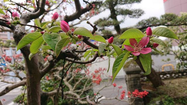 実家の花 (6).JPG