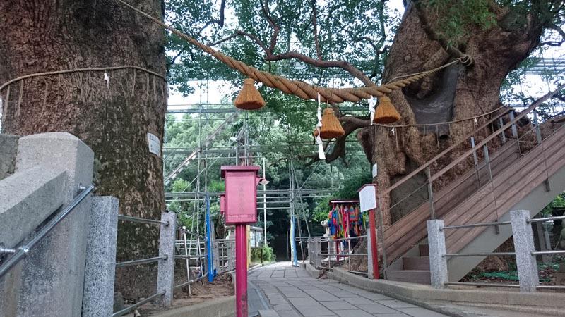 山王神社 被爆クスノキ 2.JPG
