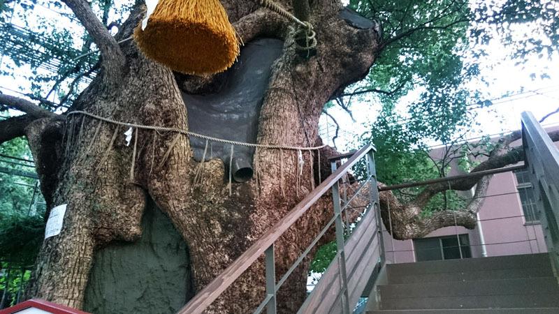 山王神社 被爆クスノキ 3.JPG