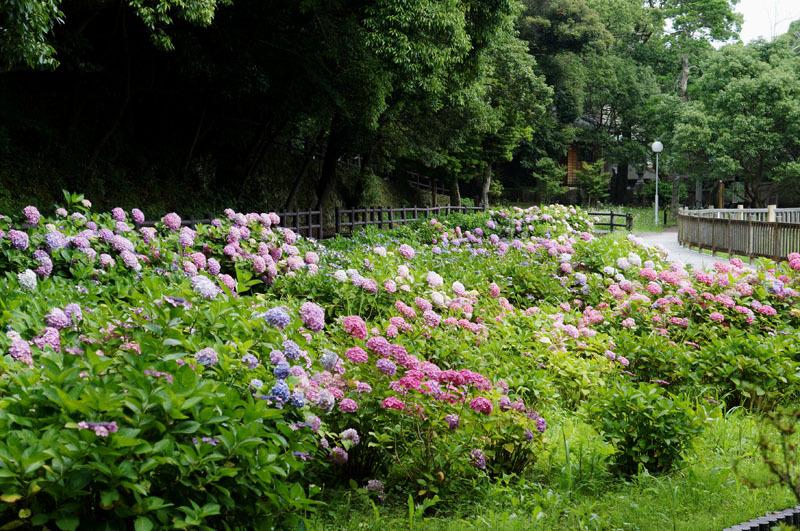 川原大池公園 5.JPG
