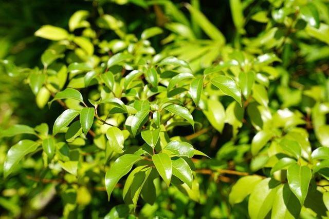 緑 3.JPG