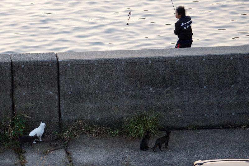 釣り 猫 3.JPG