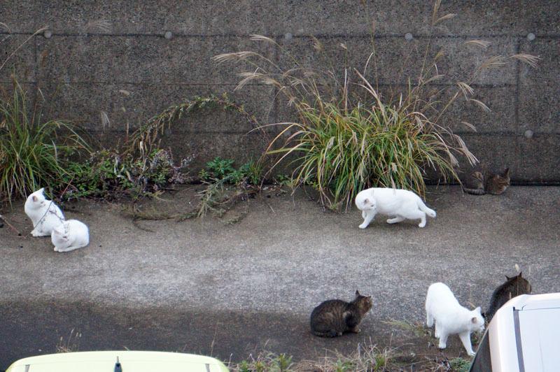釣り 猫 6.JPG