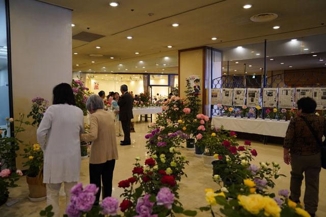 長崎ばら展 (5).JPG