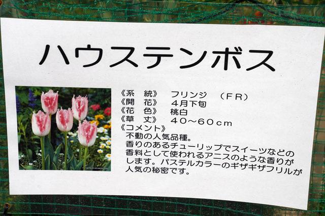香焼チューリップ祭り (5).JPG